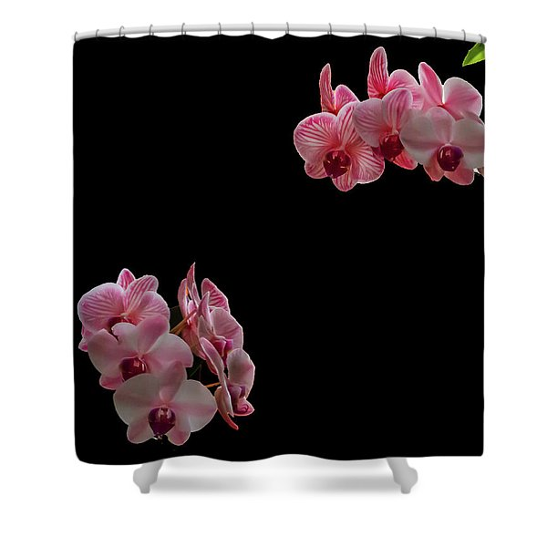 Suspended Orchids Shower Curtain