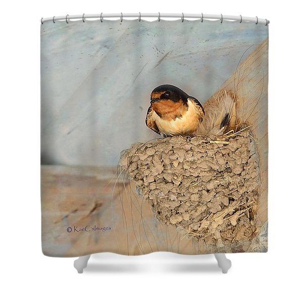 Swallow On Nest Shower Curtain