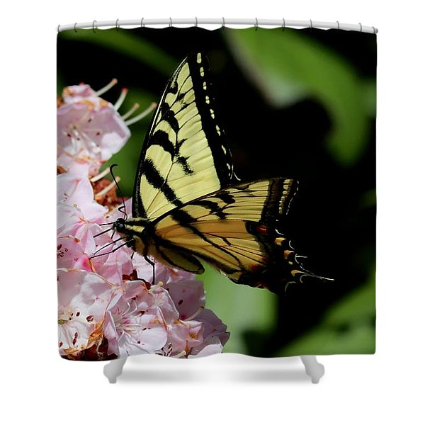 Swallow Tail On Mountain Laurel Shower Curtain