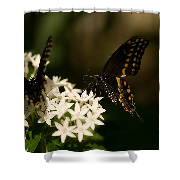 Swallowtail Butterflies At The Lincoln Shower Curtain