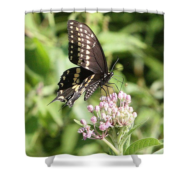 Swallowtail Butterfly 3 Shower Curtain