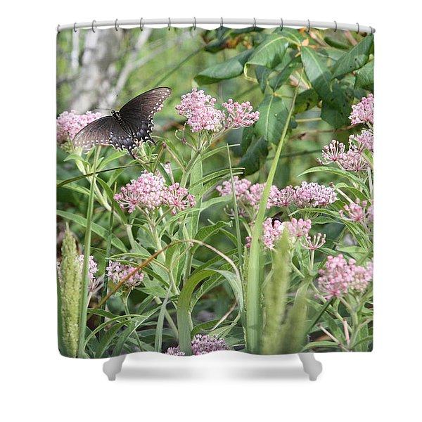 Swallowtail On Swamp Milkweed Shower Curtain