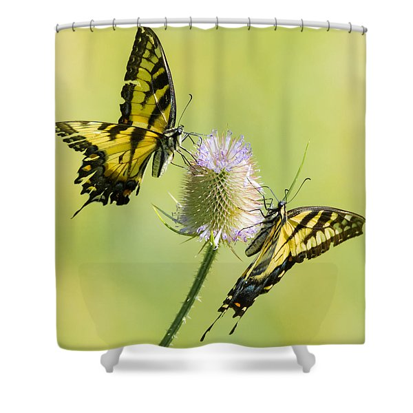 Swallowtails On Thistle  Shower Curtain