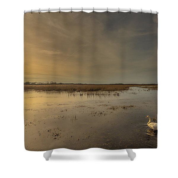 Swan At Sunset Shower Curtain