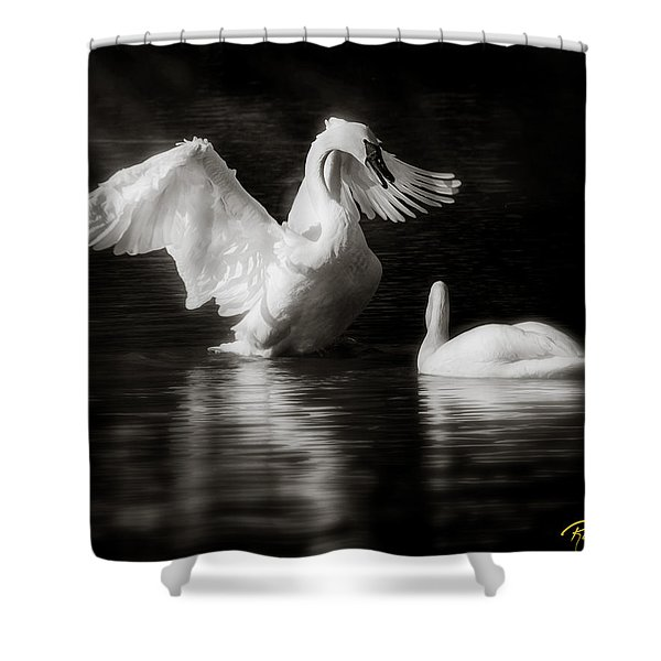 Swan Display Shower Curtain