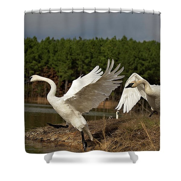 Swan Fight Shower Curtain
