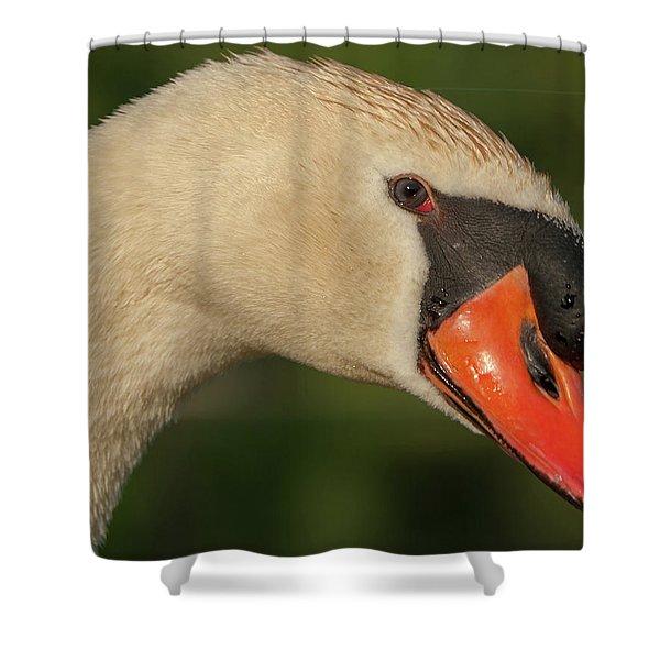 Swan Headshot Shower Curtain