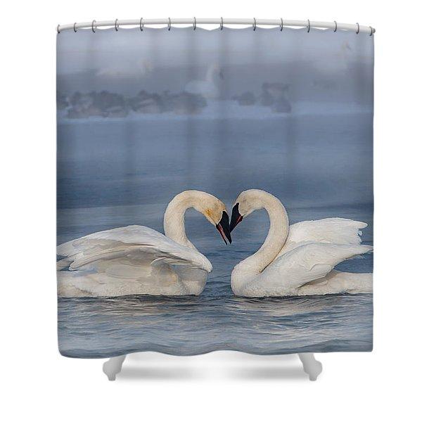 Swan Valentine - Blue Shower Curtain