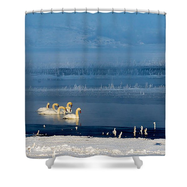 Swans On The Lake Shower Curtain