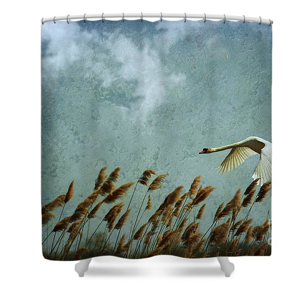Swans Rule The Marshlands Shower Curtain
