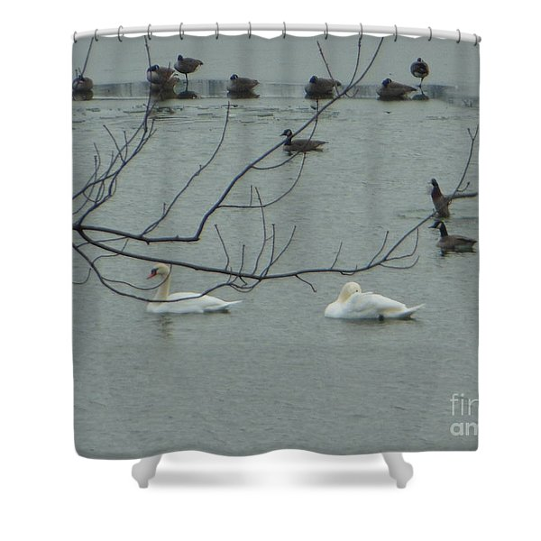 Swans With Geese Shower Curtain