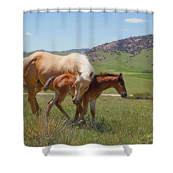 Sweet Comfort Shower Curtain