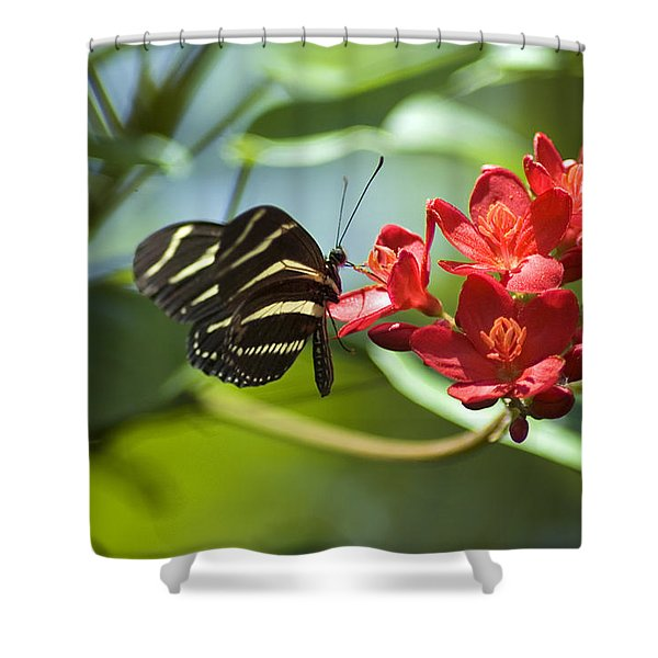 Shower Curtain featuring the photograph Sweet Nectar by Carolyn Marshall