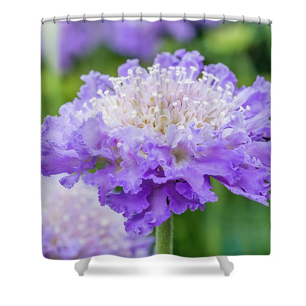Shower Curtain featuring the photograph Sweet Petal by Nick Bywater