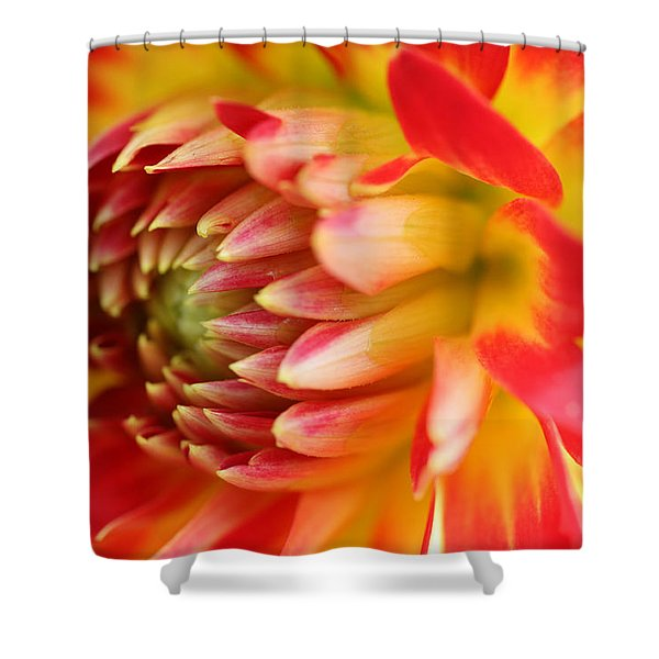 Sweet Spring Shower Curtain