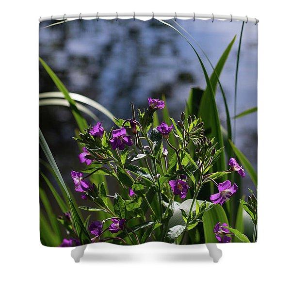 Sweet Violet Shower Curtain