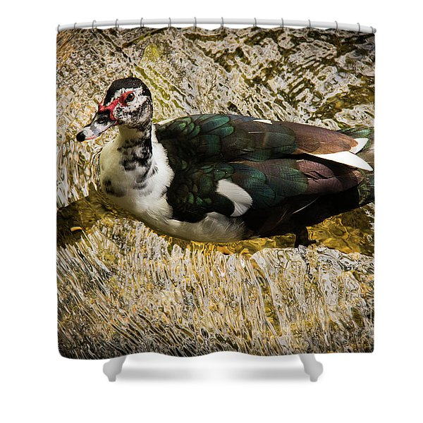 Swimming In Gold Wildlife Art By Kaylyn Franks Shower Curtain