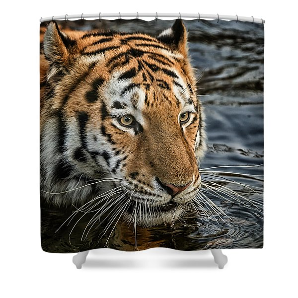 Swimming Tiger Shower Curtain