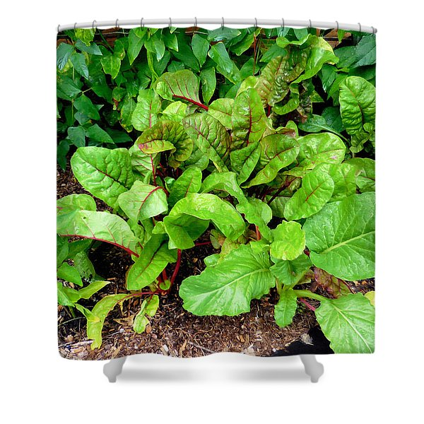 Swiss Chard In A Vegetable Garden 2 Shower Curtain