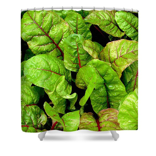 Swiss Chard In A Vegetable Garden 3 Shower Curtain