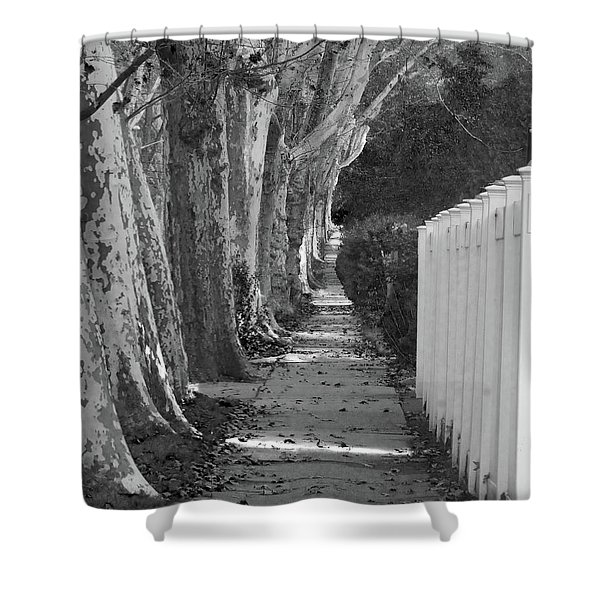 Sycamore Walk-grayscale Version Shower Curtain