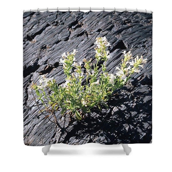 T-107709 Hot Rock Penstemon Shower Curtain
