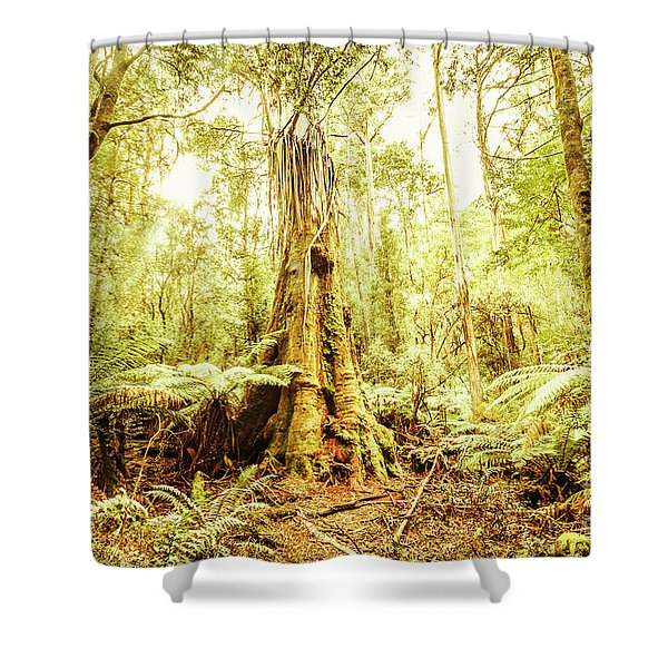 Tahune Forest Reserve Shower Curtain