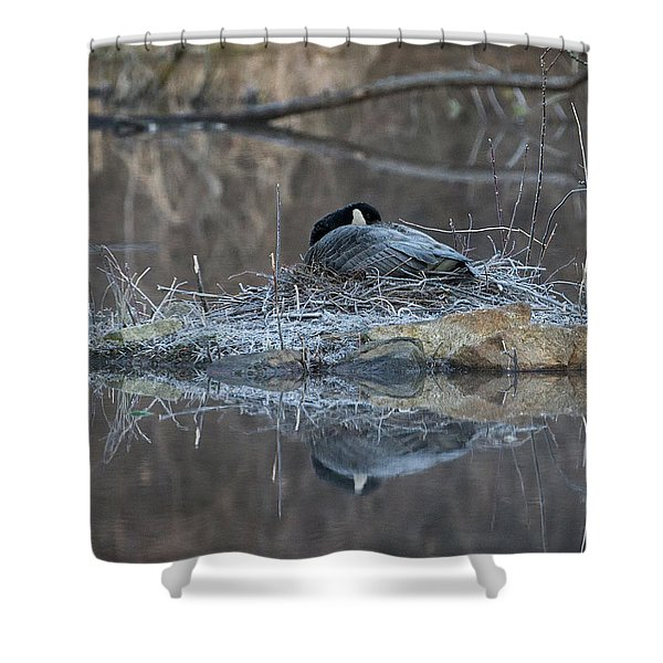 Taking A Rest Shower Curtain