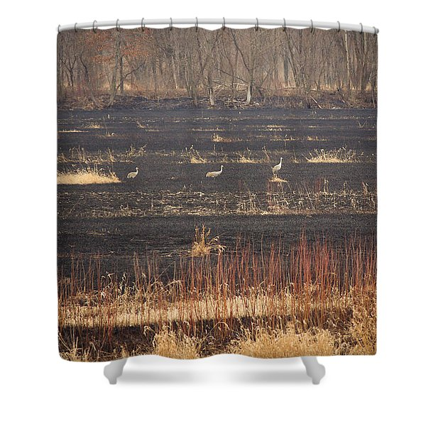 Taking A Walk Shower Curtain