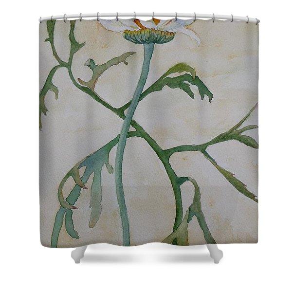 Tanacetum Shower Curtain