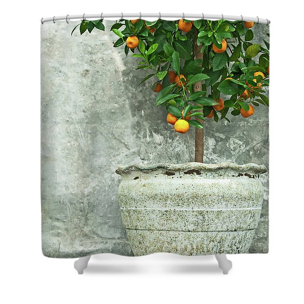 Tangerine Tree In Old Clay Pot Shower Curtain