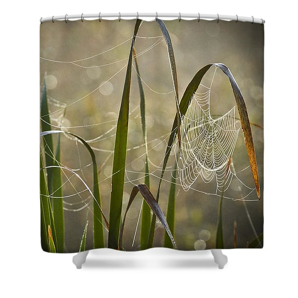 Tangled Highway Shower Curtain by Carolyn Marshall