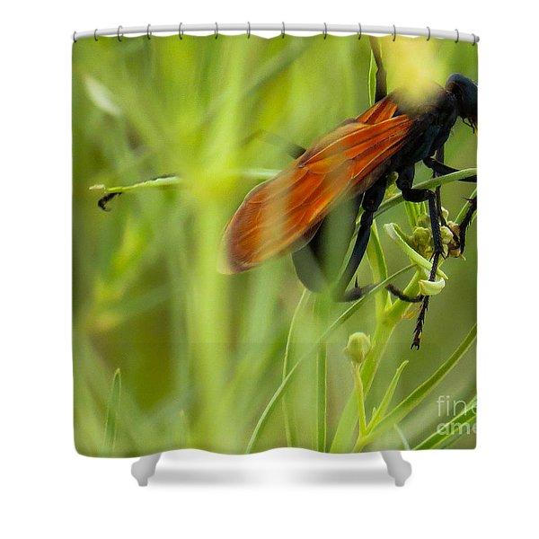Tarantula Hawk 1 Shower Curtain