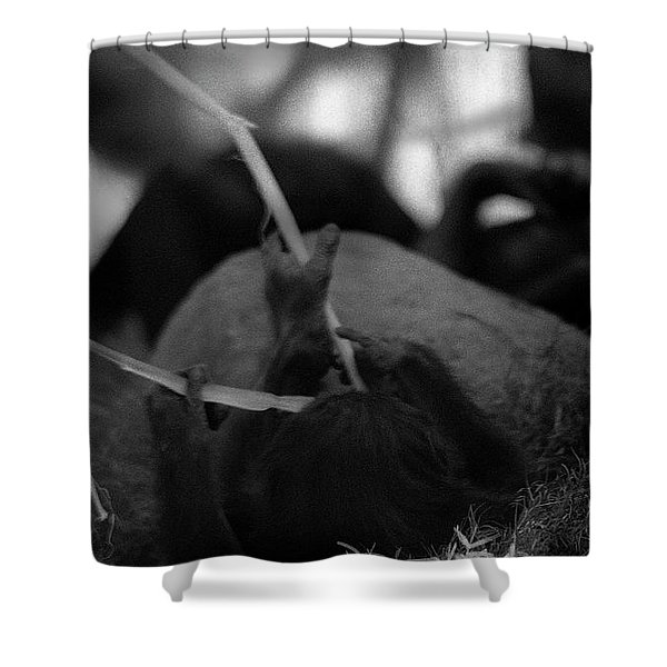 Tarry With Us Shower Curtain