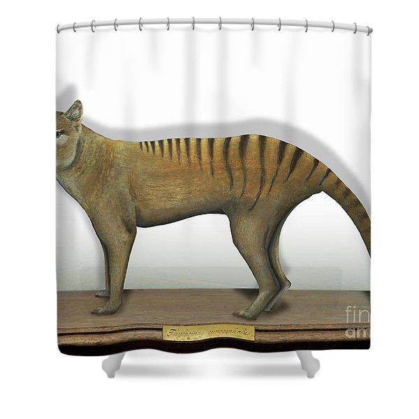 Tasmanian Tiger-thylacinus Cynocephalus-tasmanian Wolf-lobo De Tasmania-tasmanian Loup-beutelwolf    Shower Curtain