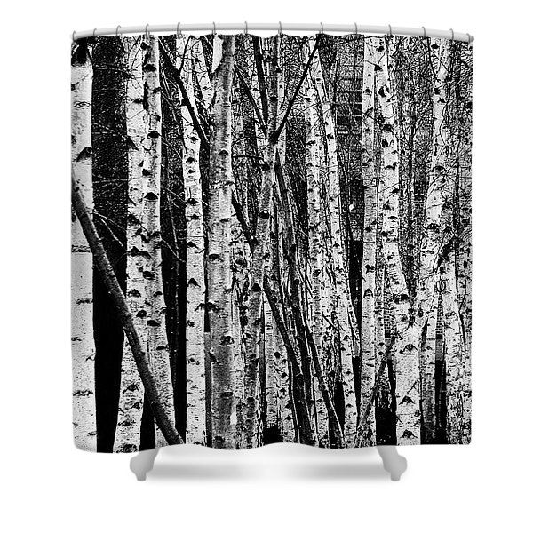 Tate Willows Shower Curtain
