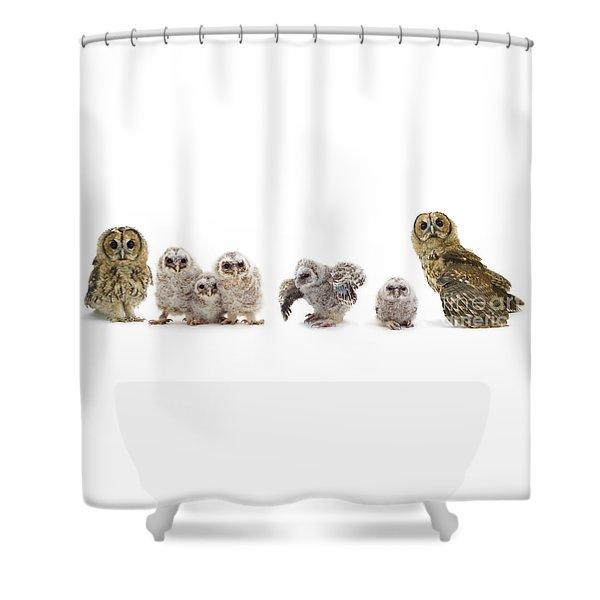 Tawny Owl Family Shower Curtain