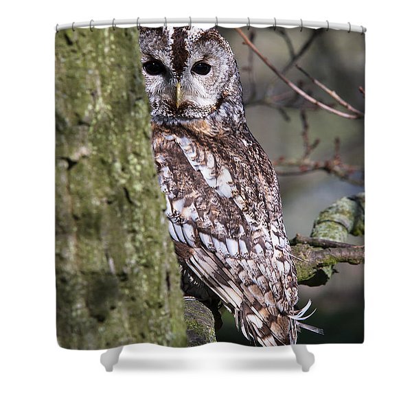 Tawny Owl In A Woodland Shower Curtain