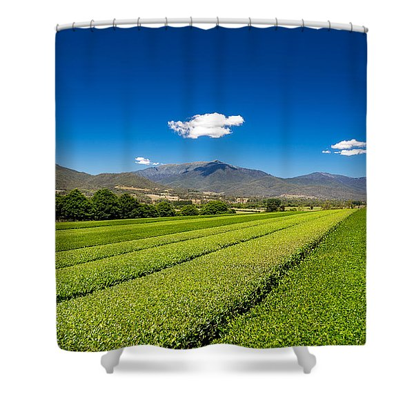 Tea In The Valley Shower Curtain