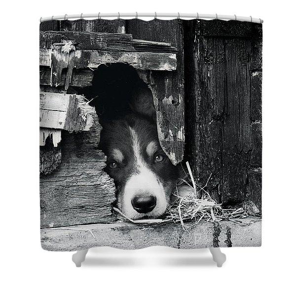 Working Border Collie Dog. Shower Curtain