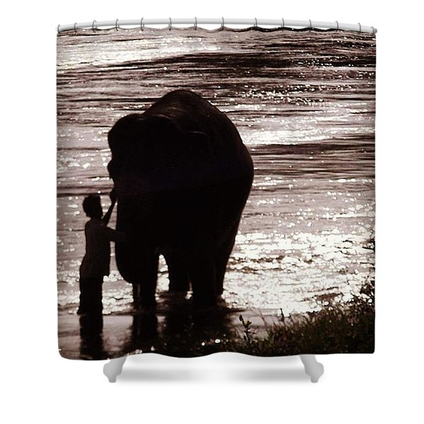 Temple Elephant Being Bathed Down At Shower Curtain
