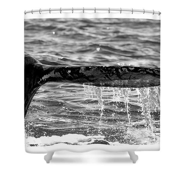 Terminal Dive Shower Curtain