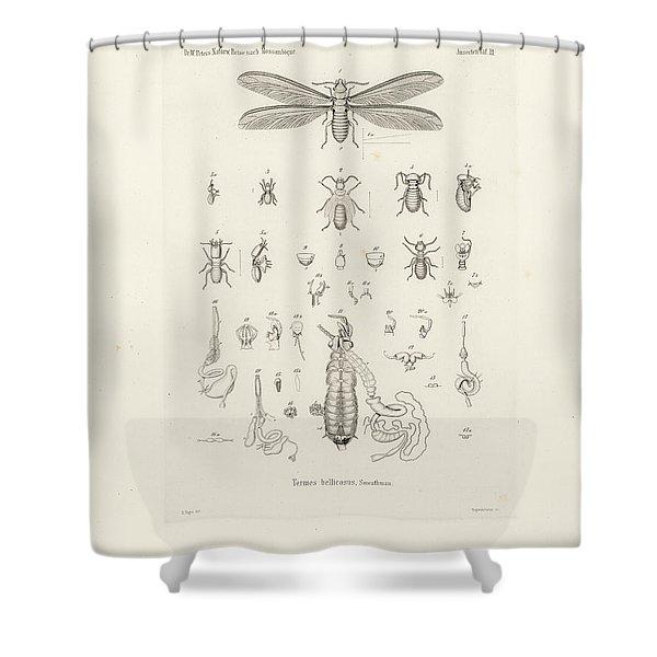 Termites, Macrotermes Bellicosus Shower Curtain