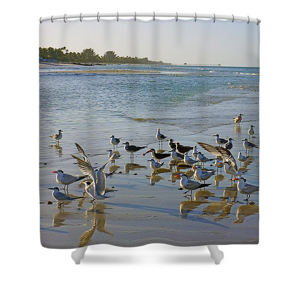 Terns And Seagulls On The Beach In Naples, Fl Shower Curtain