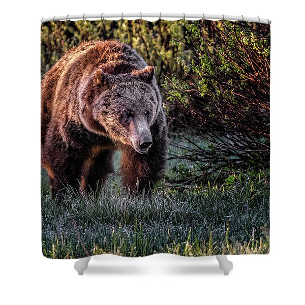 Teton Grizzly Shower Curtain