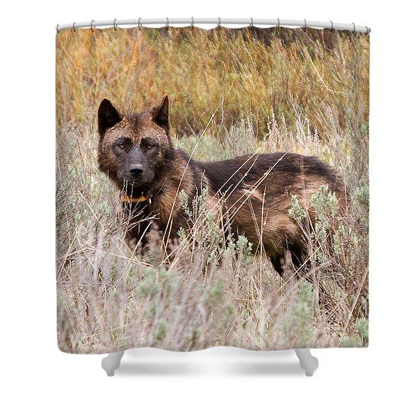Teton Wolf Shower Curtain