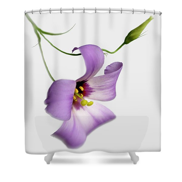 Texas Bluebell And Bud Shower Curtain