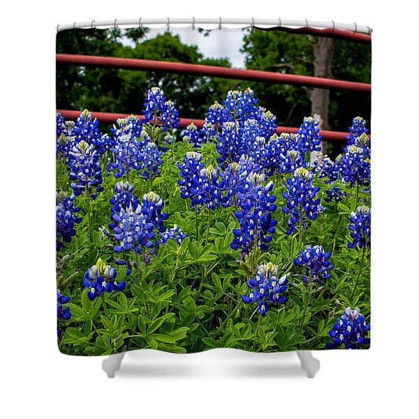Texas Bluebonnets In Ennis Shower Curtain