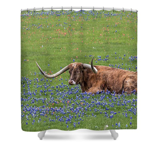Texas Longhorn And Bluebonnets Shower Curtain
