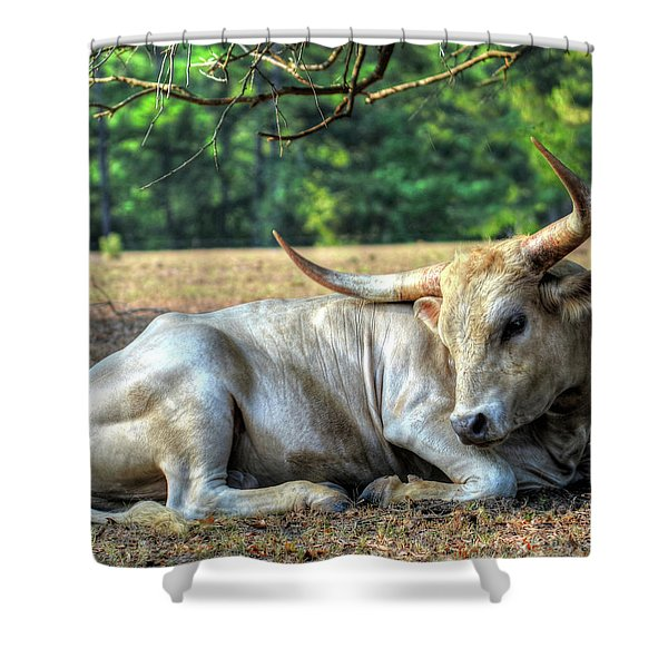 Texas Longhorn Gentle Giant Shower Curtain